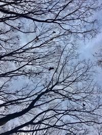 カラスの木 - ミニチュアブルテリア ダージと一緒3