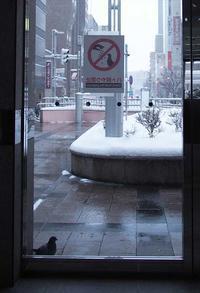 1月7日今日の写真 - ainosatoブログ02