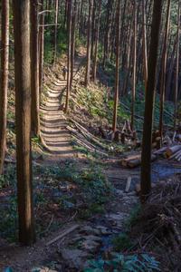 今日は散歩に日和田山へ - デジカメ写真集