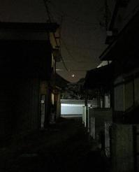 路地のお月さま - マリカの野草画帖