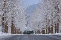 雪国 - 彩