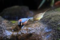 新春探鳥シリーズ最終回 - Granpa ToshiのEOS的写真生活
