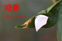 新年を迎えた越冬蝶たち - 公園昆虫記