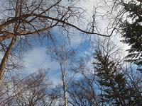 冬の蒼い空 - 北緯44度の雑記帳