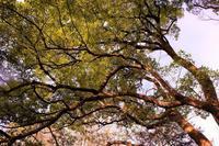冬の木々 - まほろば日記