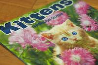 Kittens - ∞ infinity ∞