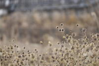 冬の匂い - ecocoro日和