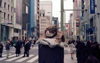 ほっこり寄り添う - 心のカメラ  〜 more tomorrow than today ...