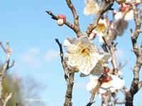 庭園 - HAIKU/winter PHOTO