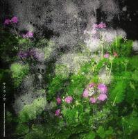 サクラソウ - Illusion on the Borderline  II @へなちょこ魔術師