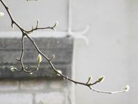 新春の光 - フランス Bons vivants des marais