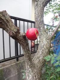 梅の木にリンゴ - がちゃぴん秀子の日記