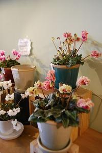 こんな日はお家の中で♪ - 花と暮らす店 木花 Mocca