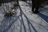 冬のバラキ湖③バラキ高原 - 光画日記