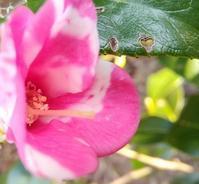 胡蝶の庭… - 侘助つれづれ