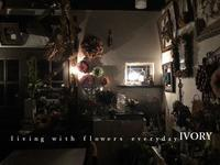 雪bolo -  Flower and cafe 花空間 ivory (アイボリー)
