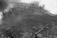 長い冬休みでした - ナンちゃんの天然色写真&白黒写真