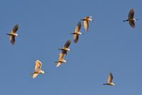 多摩川の鳥たち - ヒグラシの日記  (あぁ、しあわせな日々)