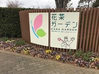 花菜ガーデン① - つれづれ日記