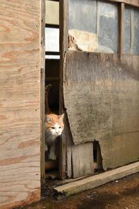 漁港の猫たち2019.01.04 - ちわりくんのありふれた毎日II