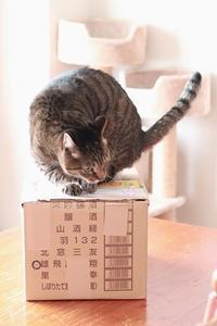 岩手のおいしいりんご♪♪ - きょうだい猫と仲良し暮らし