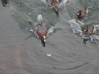 1月10日神崎川で夕刻撮影。 - 写真で楽しんでます! スマホ画像!