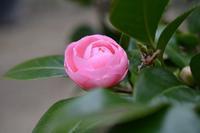 春を待つ - refresh-3