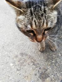 たぶん地域猫の「GOMESU」ちゃん - 宝塚車検センター従業員ブログ