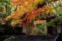 京の紅葉2018染まる法然院 - 花景色-K.W.C. PhotoBlog