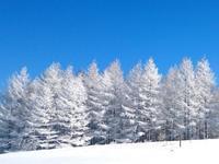 2019冬の撮影ツアーのご案内‼️ - カメラの東光堂