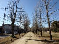 『学びの森と各務原市民公園を歩いて・・・・・』 - 自然風の自然風だより