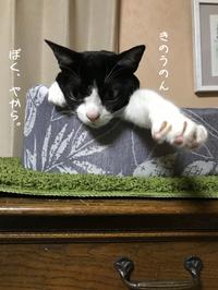 はちわれギャング見分け - gin~tetsu~nosuke