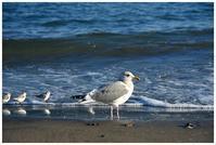 可愛い海鳥 -  one's  heart