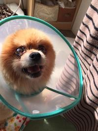 定期健診 1/11 - 老犬。犬生これから。