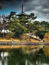興福寺五重塔 - 風の香に誘われて 風景のふぉと缶