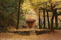 蓬莱山神社 紅葉 - photograph3