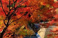京の紅葉2018秋色の嵯峨野 - 花景色-K.W.C. PhotoBlog