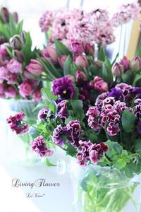球根のお花♡ - Le vase*  diary 横浜元町の花教室