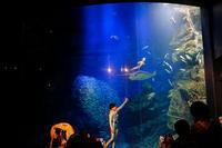 京都水族館⑫ - 平凡な日々の中で