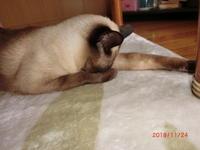我が家の猫 - 香りの部屋