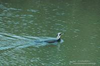 ピアノ池の鳥たち -追いかけて- - It's only photo 2
