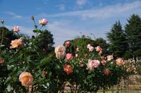 薔薇の名前Ⅱ - 季節の風を追いかけて