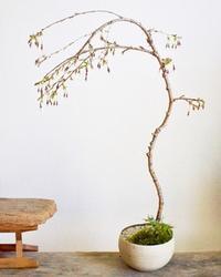 2月の植物ワークショップ日程 - Kitowaの日々