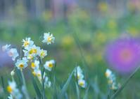 春を夢見て - ほほえみ