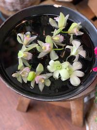 【成人式の生花のヘッドパーツ】出番待ちでお花スタンバイ - ルーシュの花仕事
