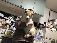 バカ犬服を着る - カメラノチカラ