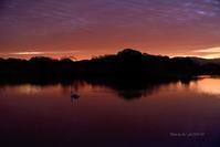 不安…@ 大焼けの朝心ここにあらず-2水上池 - 東大寺が大好き