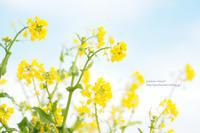 春を呼ぶ色 - jumhina biyori*