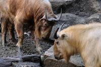 1歳と2歳 - 動物園に嵌り中