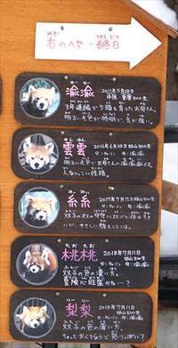 新春の旭山詣・その2 - レッサーパンダ☆もふてく放浪記